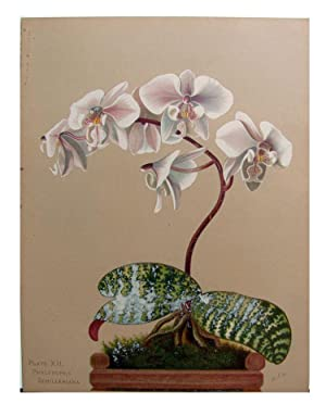 Orchids, the Royal Family of Plants.: Miner, Harriet Stewart