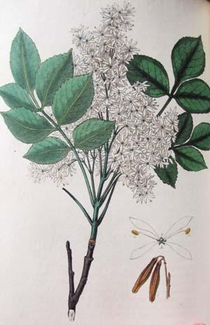 Medical Botany; or, Illustrations and Descriptions of the Medicinal Plants of the London, Edinburgh...