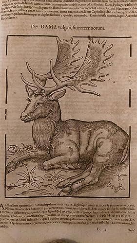 Conradi Gesneri Tigurini Historiae Animalium Liber 1 De Quadipetribus: GESSNER Conrad