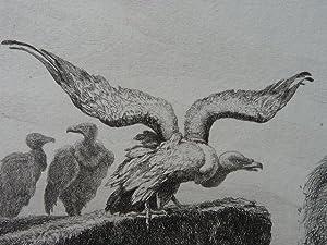 La Fontaine, Fables, Les vautours et les: DELIERRE Auguste