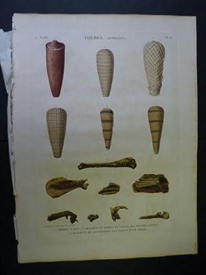 DESCRIPTION DE L'EGYPTE. Thèbes. Hypogées. Momies d'ibis,: DUTERTRE & JOMARD
