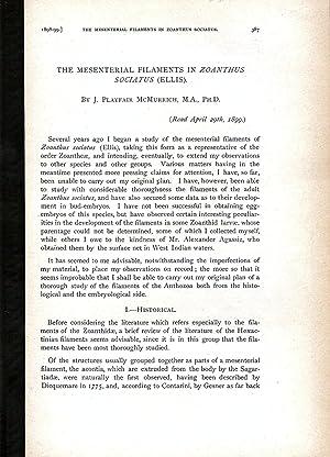 THE MESENTERIAL FILAMENTS IN ZOANTHUS SOCIATUS (ELLIS).: McMurrich, J. Playfair.