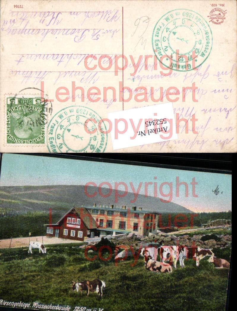 552345,Schlesien Riesengebirge Wosseckerbaude Kühe Hirschberg Harrachov