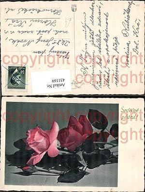 431169,Blumen Rote Rosen Blüten Srdecne prani