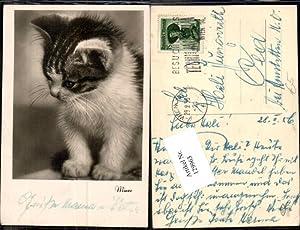 129963,Mieze Süsse AK Katze Cat