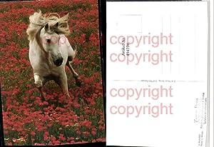 4947770,Im Mohnfeld Tier Pferd Schimmel Blumen