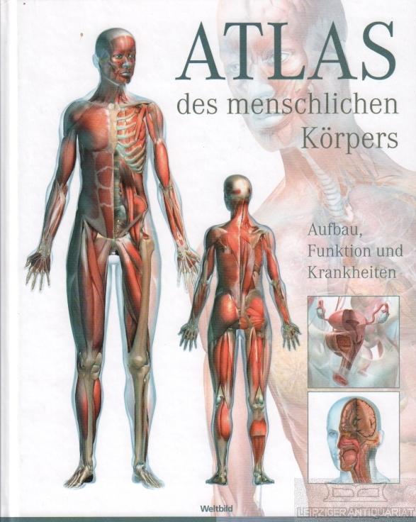 atlas menschlichen körpers aufbau funktion von beverly mcmillan - ZVAB