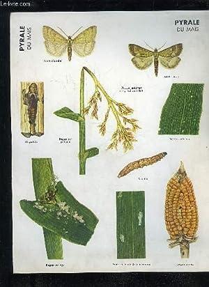 LOT D'ENVIRON 40 PLANCHES SUR LES MALADIES DES PLANTES (NON COMPLET): COLLECTIF
