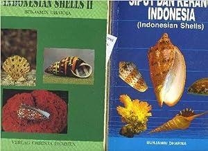 SIPUT DAN KERANG INDONESIA (INDONESIAN SHELLS) -: DHARMA BUNJAMIN