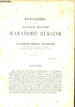 EXPLICATION DES PLANCHES MURALES D'ANATOMIE HUMAINE: RAPHEL BLANCHARD