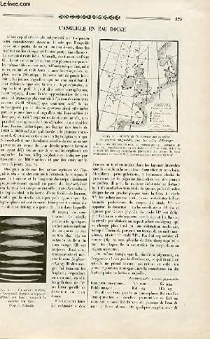 Revue des sciences et de leurs applications aux arts et à l'industrie, L'anguille en eau ...
