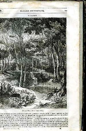 LE MAGASIN PITTORESQUE - Livraison n°052 -: Cazeaux Euryale et
