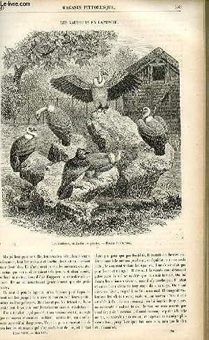 LE MAGASIN PITTORESQUE - Livraison n°20 - Les vautours en captivité.: CHARTON EDOUARD.