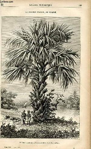 LE MAGASIN PITTORESQUE - Livraison n°32 - Le corypha parasol ou talipot.: CHARTON EDOUARD.