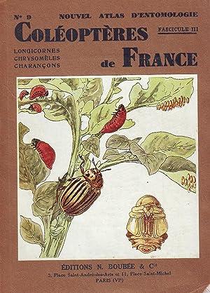 Coléoptères de France - Longicornes, chrysomèles, charançons: AUBER Luc