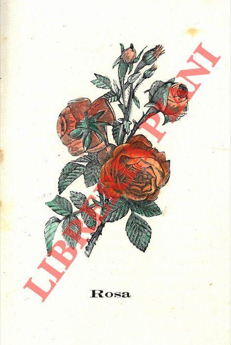 Linguaggio Fiori.Il Linguaggio Dei Fiori 1894 Libreria Piani Gia