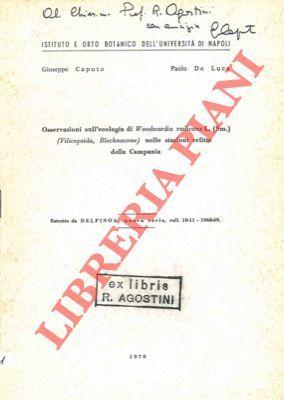 Osservazioni sull'ecologia di Woodwardia radicans L. (Sm.): CAPUTO Giuseppe -