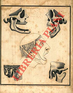 The Natural History and Diseases of the Human Teeth. In two parts. Illustrated with 23 Copper Pla...