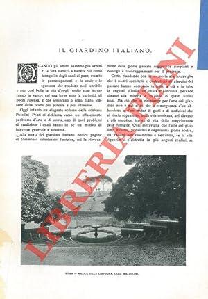 Il giardino italiano.: Ruscus -