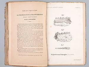 Sur quelques dents de formes singulières provenant des faluns de Saucats (Gironde) - ...