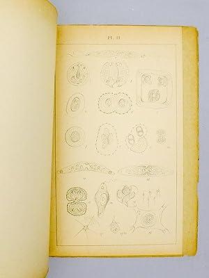 Nature végétale des Euglènes.: BOUGON, Docteur