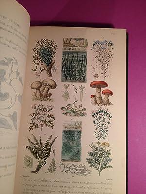 PLANTES ET BÊTES ; Causeries familières sur l'histoire naturelle. Illustré...