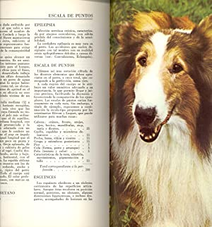 ENCICLOPEDIA CANIDA (A - Z , OBRA COMPLETA): G. M. Villenave (Direccion) - Edmond Dechambre, ...