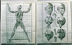Esposizione anatomica della struttura del corpo umano. si aggiungono.una dissertazione sopra l&#x27...