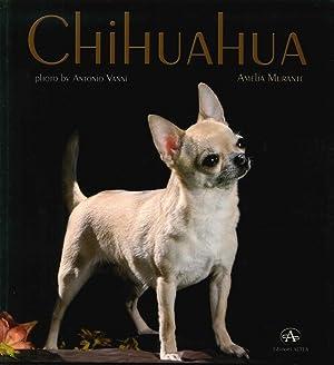 Chihuahua.: Murante Amelia