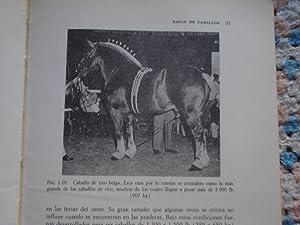 CRIA Y MANEJO DEL CABALLO: ULMER, Donald E. + JUERGENSON, Elwood M.