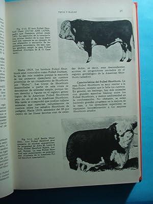 PRODUCCIÓN BOVINA PARA CARNE: ENSMINGER, M.E.