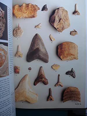 THE ILLUSTRATED ENCYCLOPEDIA OF FOSSILS: PINNA, Giovanni