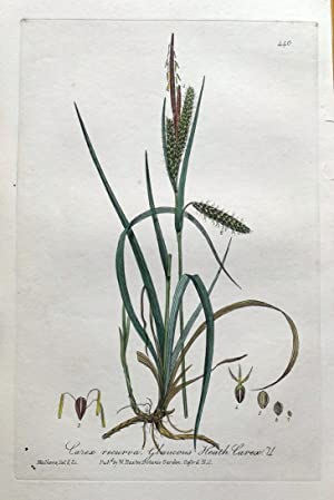 RUSTY CLIFF FERN Woodsia Ilvensis Hand Coloured Antique Botanical Engraving 1829