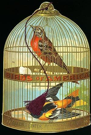 1888 Allen and Ginter 'Birds of America': Allen & Ginter