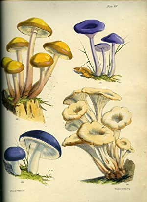 Illustrations of the Fungi of Our Fields: Price, Sarah