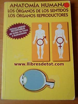 Anatomía humana. Los órganos de los sentidos.: BarásteguI Almagro. Fernández