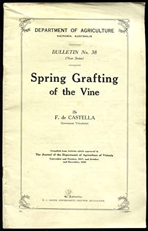 Spring grafting of the vine.