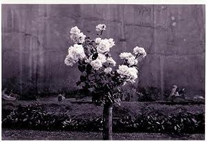 Roses.: Hustinx, Damien (Luik/L�ttich/Li�ge, 1954).