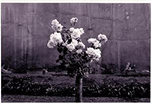Roses.: Hustinx, Damien (Luik/Lüttich/Liège, 1954).
