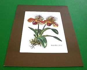 Orchideen. Vier Original-Reproduktionen (Kronen-Kunstdrucke).: Cramer, Ingeborg (Hrsg.) und Claus ...