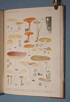 Flora Agaricina Danica. 5 vols. bound in: Lange, Jakob E.: