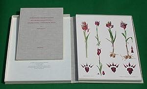 Monographie und Ikonographie der Orchidaceen-Gattungen Serapias, Aceras, Loroglossum, Barlia. Text-...