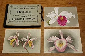 Dictionnaire Iconographique des Orchidées. Genre Laelio-Cattleya (Laelia-Cattleya).: ...