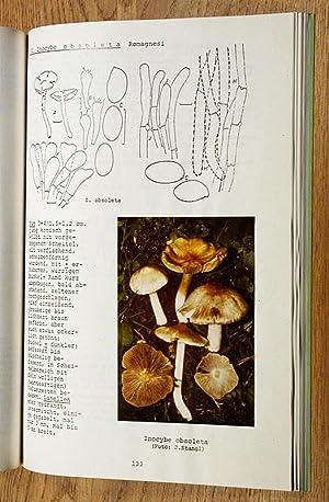 4. Beitrag zur Kenntnis der Ulmer Pilzflora: Rißpilze (Inocyben).: Stangl, J. und M. Enderle: