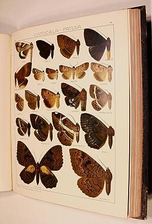 Die Groß-Schmetterlinge der Erde. 1. Abteilung: Fauna: Seitz, Adalbert: