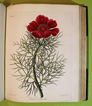 Floral Illustrations of the Seasons - Consisting: Roscoe, Mrs. Edward