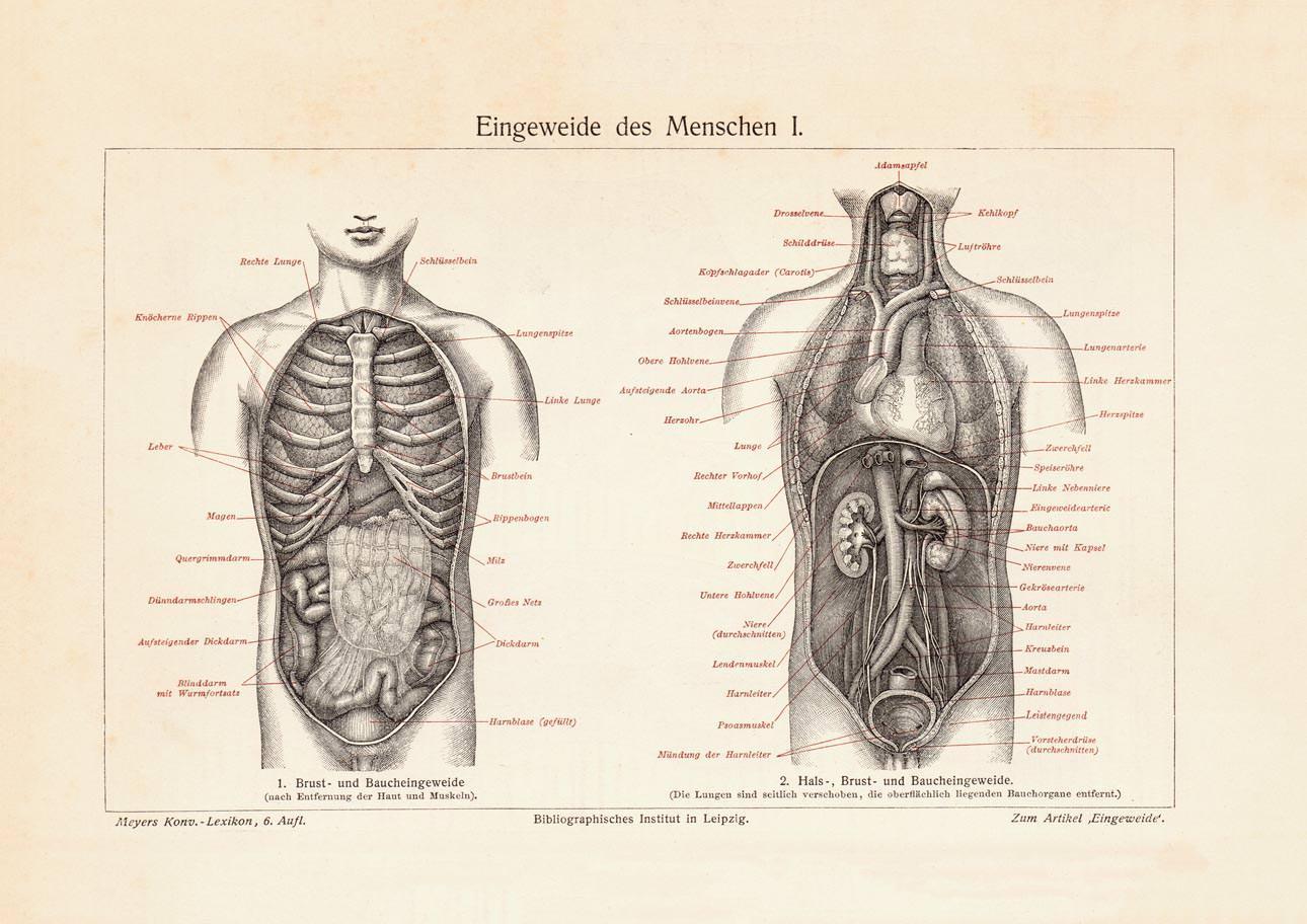 Fantastisch Bilder Von Bauch Anatomie Galerie - Anatomie Ideen ...