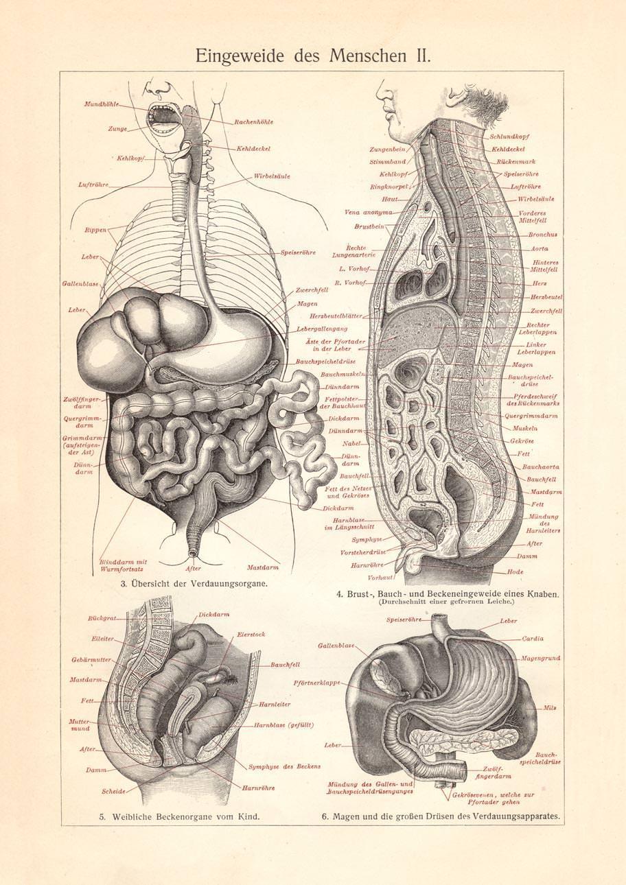 Groß Anatomie Weiblicher Bauch Und Becken Zeitgenössisch - Anatomie ...