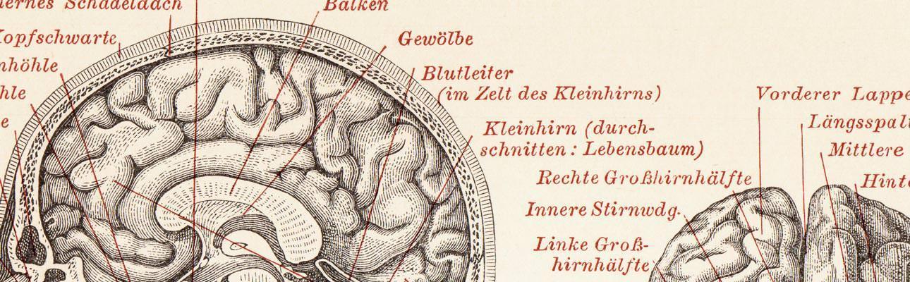 Ziemlich Lebensbaum Anatomie Bilder - Anatomie und Physiologie des ...