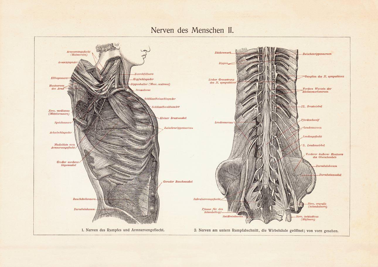 Berühmt Nerven Im Hals Und Kopf Galerie - Anatomie Ideen - finotti.info